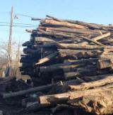 Firelogs - Pellets - Chips - Dust – Edgings - Firewood Cleaved - Not Cleaved, Firewood/Woodlogs Not Cleaved, Beech (Europe)