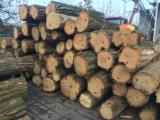 Hardwood  Logs Poland - Saw Logs, Acacia, FSC