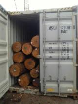 Hardwood Logs For Sale - Register And Contact Companies - Oak Q. Robur 1/2 sort Ends Waxed