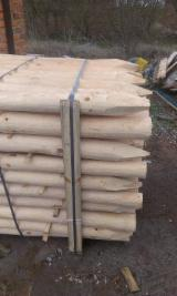 Softwood  Logs For Sale Poland -  cylindrical trimmed round wood, Pine (Pinus sylvestris) - Redwood