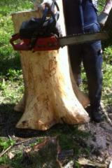 Hardwood  Logs - Wanted - White Ash tree's for hurley's