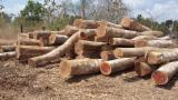 Selling Teak ( Tectona grandis ) and Balsam ( Myroxylon balsamum ) logs