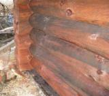 Softwood  Logs Fir Spruce Pine - Fir/Spruce/Pine -- m AB Cylindrical Trimmed Round Wood Romania