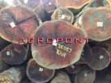 Hardwood  Logs - English