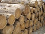 Ash logs, Teak wood Logs, Burma Teak Logs, Sweetgum Log, Cypress Log