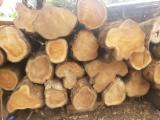 Tropical Wood  Logs For Sale - Saw Logs, Teak