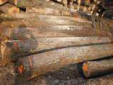 Hardwood  Logs Demands - Buy basswood/lime sawn logs, AB grade, 1500 CBM/month