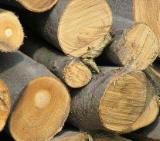 Wholesale Energy Products - Other Types Poland - Firewood Cleaved - Not Cleaved, Firewood/Woodlogs Cleaved, Beech (Europe)