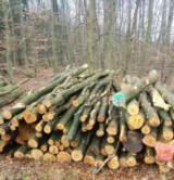 Hardwood  Logs For Sale Romania - Firewood, Beech (Europe)
