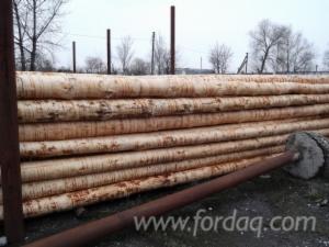 Pine-%28Pinus-sylvestris%29---Redwood--13-24-cm------Cylindrical-trimmed-round-wood