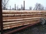 Softwood  Logs For Sale - Stakes, Pine (Pinus sylvestris) - Redwood