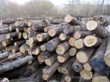 Hardwood  Logs For Sale Romania - Saw Logs, Oak (European)
