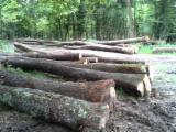 Hardwood  Logs - Saw Logs, Oak (European)