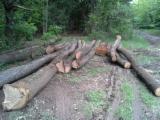 Hardwood  Logs For Sale Romania - Firewood, Oak (European)