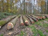 Hardwood  Logs For Sale - Saw Logs, Ash (White)
