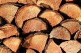Commercio all'ingrosso Pellet di Legno ENplus Tutte le specie di latifoglie in Bielorussia