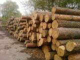 Softwood  Logs For Sale Poland - Pine logs