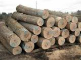 Hardwood  Logs Poland -  Oak logs, Beech logs, Birch logs, Teak logs, Ash logs, spruce and others logs