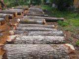 Eu walnut special logs for boules