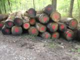 Hardwood  Logs Demands - Saw Logs, Oak (European)
