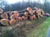 Hardwood  Logs - Oak (American Red Origin: Europe) wanted