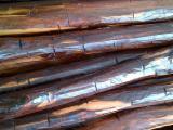 苏利南 - Fordaq 在线 市場 - 锯材级原木