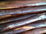 Suriname Hardwood Logs - Saw Logs from Suriname