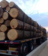 Softwood  Logs Demands - We are looking for fir, Douglas fir, pine. We expect offers. Thank you