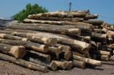 Hardwood  Logs For Sale Romania - Saw Logs, Ash (White)(Europe)