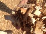 Firewood - Chips - Pellets  - Fordaq Online market Tan Oak Wood Chips