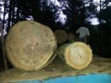 Hardwood  Sawn Timber - Lumber - Planed Timber For Sale - EUKALYPTUS VIMINALIS - PLANKS & LUMBERS