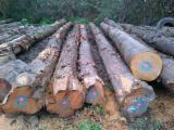 Hardwood  Logs - Saw Logs, Cherry (European Wild)