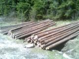 Softwood  Logs For Sale - Spruce  8-12 m AB Conical Shaped Round Wood from Romania