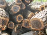Tropical Wood  Logs - Teak, rosewood, doussie, mahogany, tali tronchi squadrati