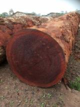 Tropical Wood  Logs - Buy Mukulungu log