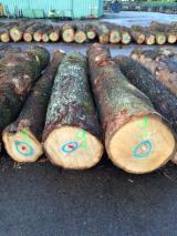 Hardwood  Logs - OAK/ BEECH/ ASH LOGS FOR EXPORT