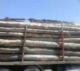 Firewood, Pellets And Residues Beech - Beech Firewood/Woodlogs Not Cleaved, 235 RON