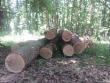 Hardwood  Logs For Sale Romania - Veneer Logs, Oak (European)