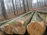 Hardwood  Logs Germany - German Beech logs