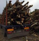 Wholesale Energy Products - Other Types Poland - Wholesale Poplar Firewood/Woodlogs Cleaved in Romania