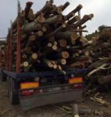 Poplar Firewood/Woodlogs Cleaved in Romania