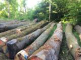 Forest and Logs - Oak Logs, diameter 30; 40+ cm