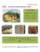 Softwood  Logs For Sale - pine wood logs from Siberia, Russia.