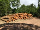 Softwood  Logs For Sale - Douglas logs