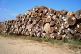 Standing Timber For Sale - Basralocus