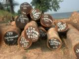 Tropical Wood  Logs Wenge - Saw Logs, Wenge, Dem. Rep. Congo (Zaire)