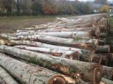 Hardwood  Logs Peeling Logs - Peeling Logs, Poplar