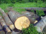 Hardwood  Logs China - White oak logs