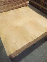 Veneer Supplies Network - Wholesale Hardwood Veneer And Exotic Veneer - Birch veneer