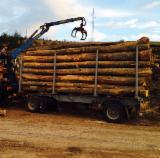 Hardwood  Logs For Sale - Logs Beech